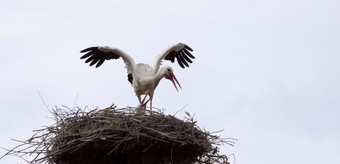 Vogelnest  Storch  © Matthias Buehner