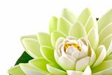 Fototapety fleur artificielle nénuphar blanc