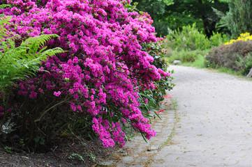 Frühlingsboten im Garten. Wege