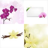 Fototapety Orchids And Vanilla Set