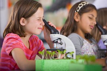 Serious students peering into microscopes in science classroom