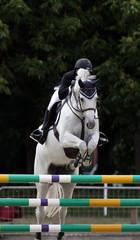 Horse Jumping Equestrian