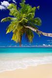 plage cocotier