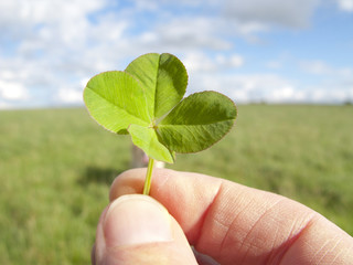 Close up of man holding delicate four-leaf clover