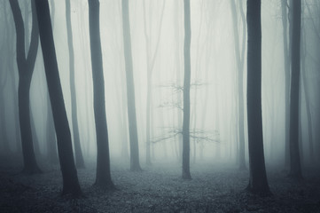 elegant tree in a cold forest with fog