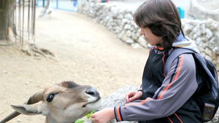 Boy Feeding Eland Antelope