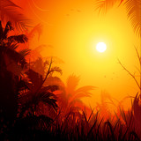 Fototapety Jungle background at sunset