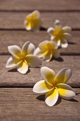 Fleurs de frangipanier sur une terrasse en bois