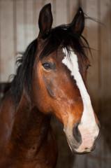 Portrait of a cute brown horse