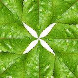 Green leaves symmetry and environmental symbol poster