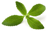 Stevia rebaudiana, sweet leaf sugar substitute