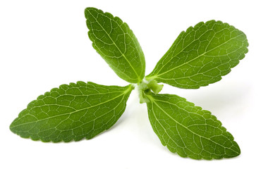 Stevia rebaudiana, sweet leaf sugar substitute