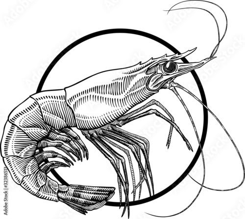 shrimp - 32386513