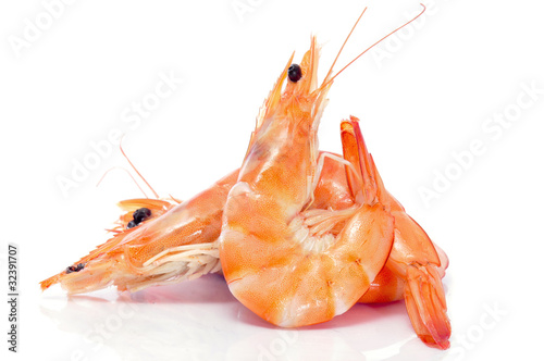 Plexiglas Schaaldieren shrimps