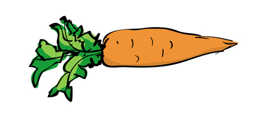 Vector sketch drawing of a carrot