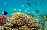 Fototapete Riff - Wasser - Fische