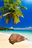 plage cocotier - 32423571