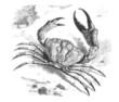 Crab 101