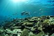 珊瑚礁と魚の群れ