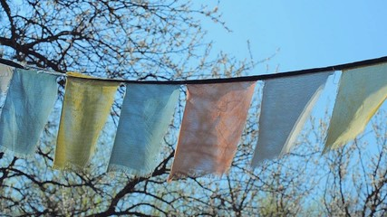 Prayer flags in wind in front of blooming tree