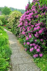 Rhododendron am Wegesrand
