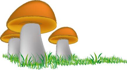 Tre funghetti - Three little mushrooms