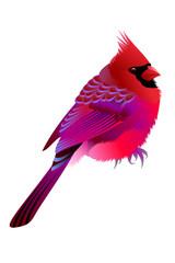 pink birdy
