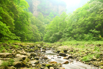 Landscape with mountain stream in forest of Zhangjiajie