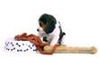 sitzender Beagle Welpe mit Napf, Würtschen und Knochen