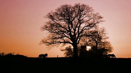 Sonnenuntergang auf Pferdekoppel