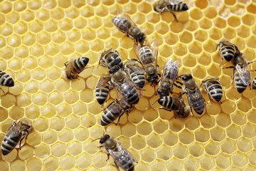 bees on honeycell