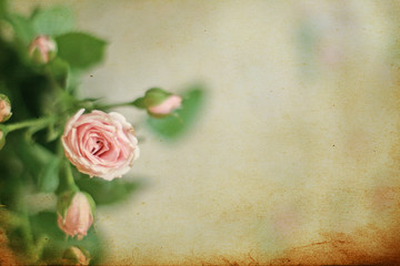 horizontal background with pink roses