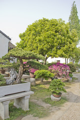 Bonsai trees in a garden