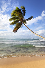 palm tree on a cara•bean beach in summer