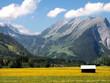 Im Tal, Blumenwiese
