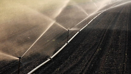 Irrigation of the field