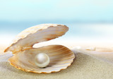 Shell with a pearl - 32542341