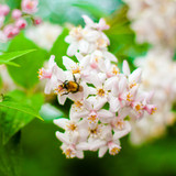 bumblebee pollinating flowers on green background poster