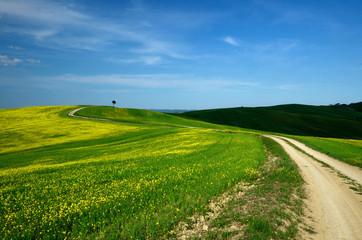 Path through Canola Field