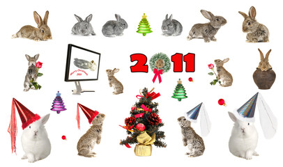Year of a hare