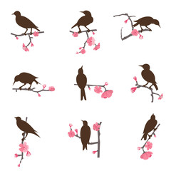 Set from birds sitting on a tree branch