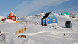 Colorful houses and dog in winter, Greenland