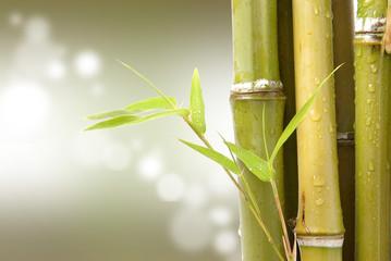 Bambù con riflessi di luce