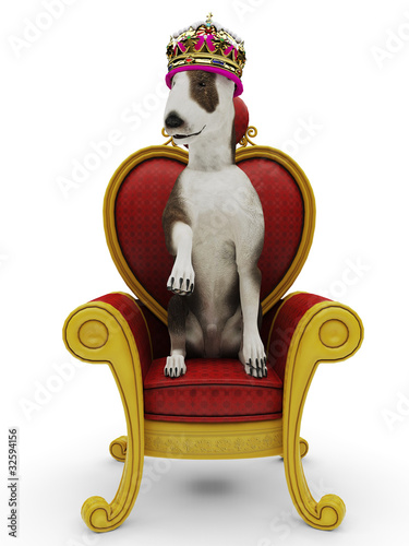 bull terrier king dog