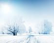 Trees frozen