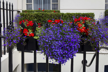 Vaso con fiori davanti una casa di Londra