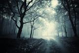 Fototapete Blau - Cocosnuss - Wald
