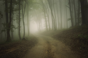 road through a forest with fog in summer