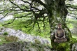 Bouddha et Meditation