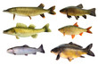 Fische 148